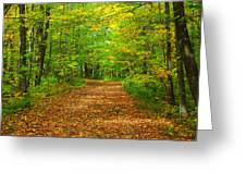 Forest Road In The Fall Greeting Card