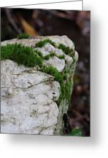 Forest Rock With Moss Greeting Card