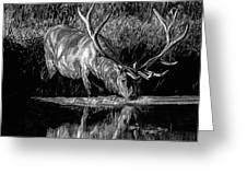 Forest Royal Bull Elk Greeting Card