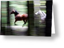 Forest Run Greeting Card