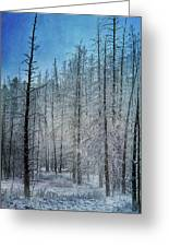 Forest Secrets  7917 Greeting Card