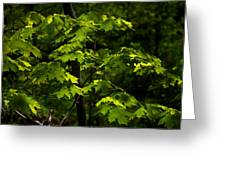 Forest Shades Greeting Card
