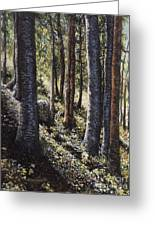 Forest Shadows Greeting Card