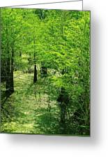 Forest So Green Greeting Card