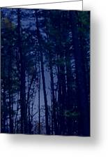 Forest Starlight Greeting Card