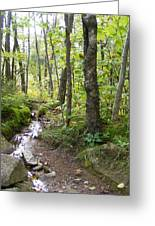 Forest Stream Greeting Card