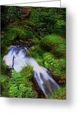 Forest Stream. Benmore Botanic Garden Greeting Card