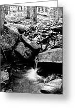Forest Stream In Black And White Greeting Card