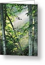 Forest Sunbeam Greeting Card