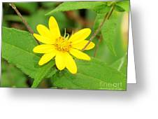 Forest Sunflower Greeting Card