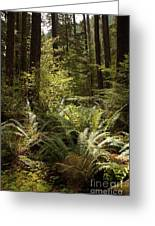Forest Sunlight And Shadows  Greeting Card