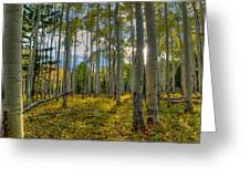 Forest Sunlight Greeting Card