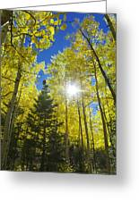 Forest Sunshine Greeting Card