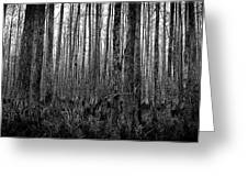 Forest Thru The Trees Greeting Card