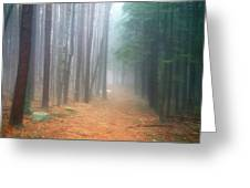 Forest Trail Through Pines Greeting Card