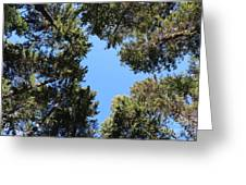 Forest Treetops Greeting Card