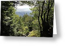 Forest View From Mt Tamalpais Greeting Card
