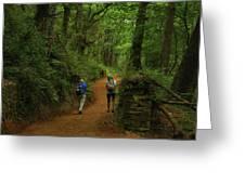 Forest Walkers, El Camino, Spain Greeting Card