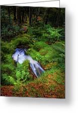 Forest  Water Stream. Benmore Botanic Garden Greeting Card