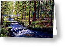 Forest Waters Greeting Card by David Lloyd Glover