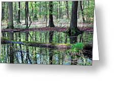 Forest Wetland Greeting Card