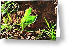 Forest Wildlife Nature Greeting Card