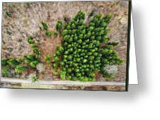 Forest With Green Trees From Above Greeting Card