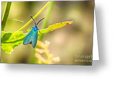 Forester Moth From Bulgaria Greeting Card