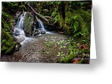 Forests Deep Greeting Card