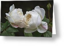 Forever And Always - Desdemona Roses Greeting Card