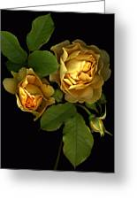 Forever Yellow Roses Greeting Card