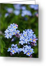 Forget Me Not 1 Greeting Card