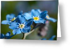 Forget -me-not 3 Greeting Card