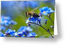 Forget Me Not Bee 2 Greeting Card
