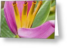 Form Color Texture Pattern Plants 1 Greeting Card