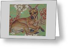 Mini-pinscher Greeting Card