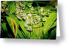 Forest's Gift. Bear's Garlic. Greeting Card