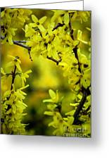 Forsythia At The Hacienda Greeting Card