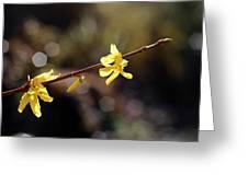 Forsythia Flowers Greeting Card by Helga Novelli