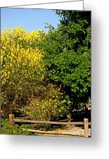 Forsythia Greeting Card