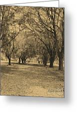 Fort Frederica Oaks Greeting Card