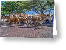 Fort Worth Stockyards Longhorn Drive Greeting Card
