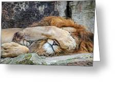 Fort Worth Zoo Sleepy Lion Greeting Card by Robert Bellomy