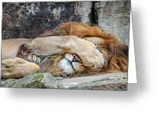 Fort Worth Zoo Sleepy Lion Greeting Card