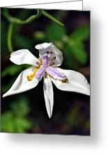 Fortnight Lily Greeting Card