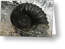 Fossil 91,000,000 Years Greeting Card