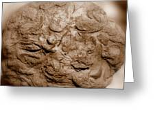 Fossil Family Greeting Card