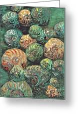 Fossil Shells Greeting Card