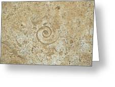 Fossils In The Cave Greeting Card