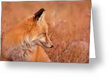 Found Fox Greeting Card